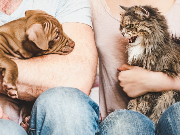 Filhote de cachorro novo, encantador e gato bonito. fechar-se Foto Premium