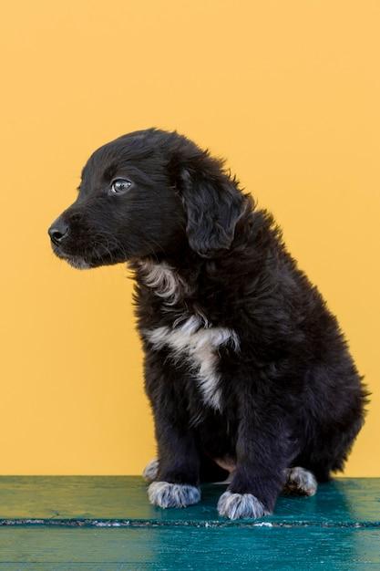 Filhote de cachorro pequeno, olhando para longe Foto gratuita