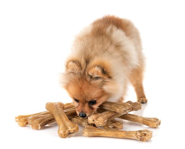 Filhote de cachorro pomeranian e ossos Foto Premium