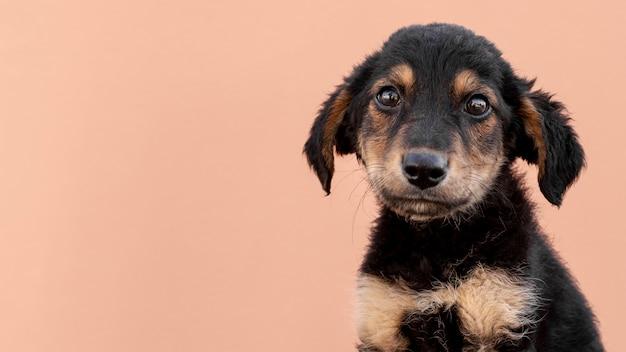 Filhote de cachorro triste com cópia-espaço Foto gratuita