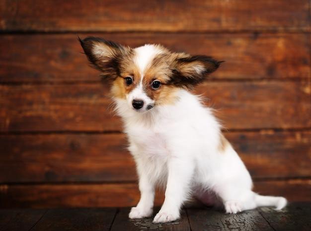 Filhote de cachorro triste em um fundo marrom Foto Premium