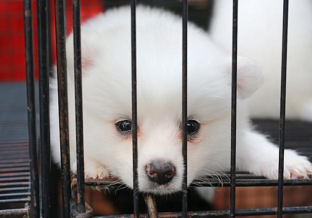 Filhotes de cachorro dentro de uma gaiola em exposição para venda Foto Premium