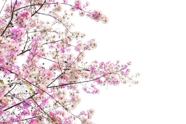 Filial da bela flor-de-rosa Foto gratuita