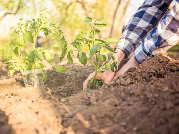 Fim, cima, pessoa, plantar, jovem, pequeno, plantas, ligado, sol Foto Premium