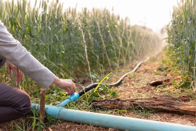 Fita de água que rega campos de arroz cevada e sistema de rega em plantas agrícolas Foto Premium