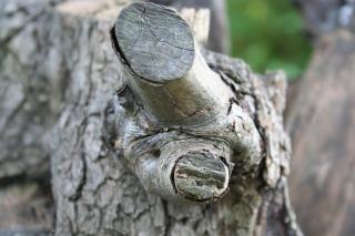 fixo árvore Foto gratuita