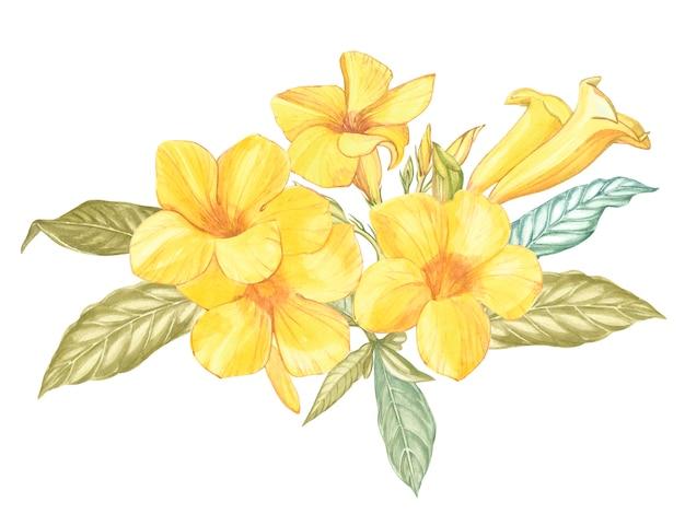 Flor amarela alamanda isolado. aquarela singapura flor realista colorido com folhas. Foto Premium