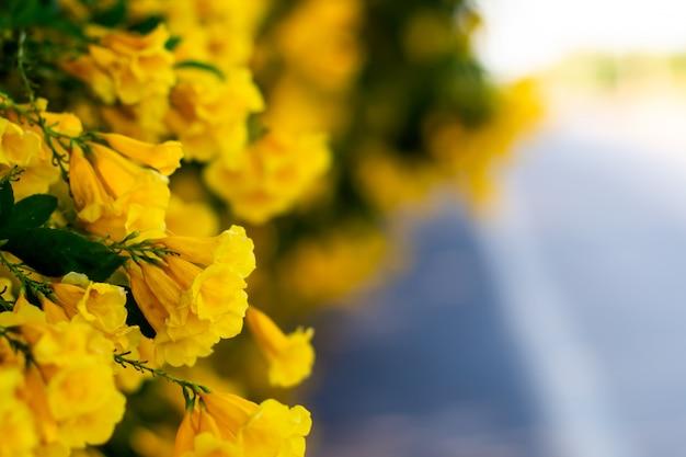 Flor amarela flores na estrada linda desfocar o fundo da natureza Foto Premium