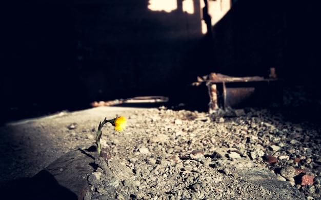 Flor amarela Foto Premium