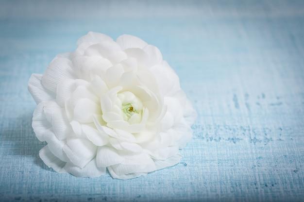 Flor branca em tecido azul claro. flor de ranúnculo. Foto Premium