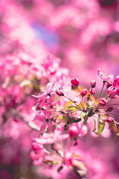 Flor com foco suave Foto Premium