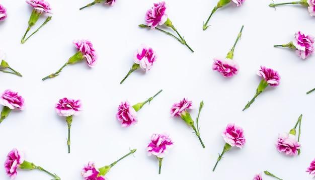 Flor cravo em fundo branco. Foto Premium