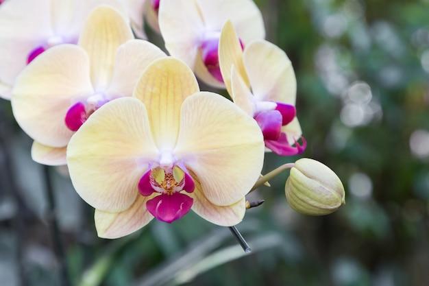 Flor da orquídea no jardim de orquídeas no inverno ou dia de primavera para beleza de cartão postal Foto Premium
