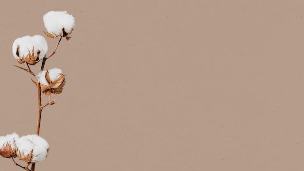 Flor de algodão e espaço de design Foto gratuita
