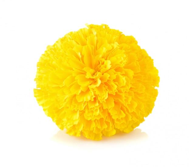 Flor de calêndula em branco Foto Premium