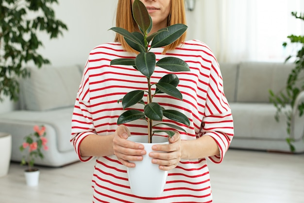 Flor de ficus nas mãos de uma menina. folhas verdes de uma planta em casa. copie o espaço. floresta urbana Foto Premium