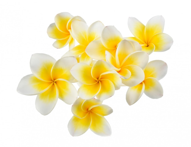 Flor de frangipani isolado no fundo branco Foto Premium