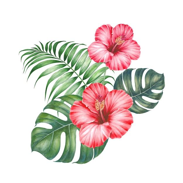 Flor de hibisco vermelho. Foto Premium