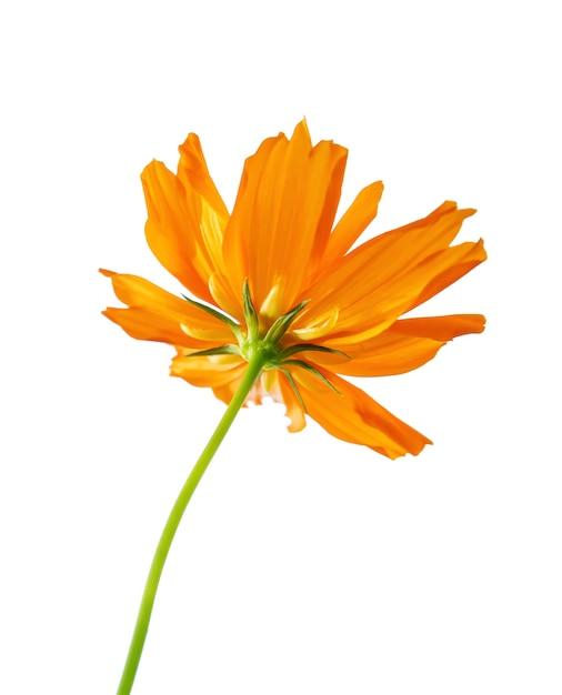 Flor de laranja de foco seletivo isolada em um branco. arquivo contém com traçado de recorte tão fácil de trabalhar. Foto Premium