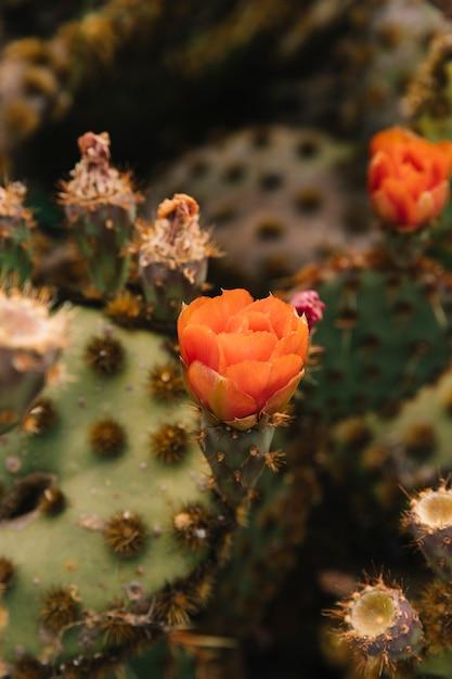 Flor de laranjeira na planta suculenta Foto gratuita