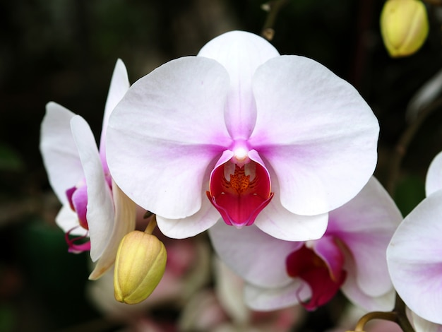 Flor de orquídea closeup em fundo de jardim de inverno Foto Premium