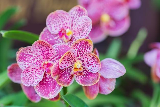 Flor de orquídea no jardim de orquídeas no inverno ou dia de primavera Foto Premium
