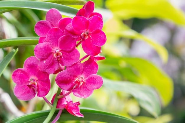 Flor de orquídea no jardim de orquídeas no inverno Foto Premium