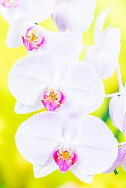 Flor de orquídea Foto gratuita