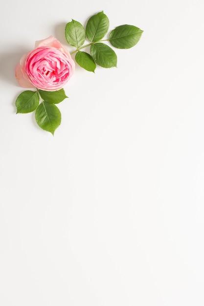 Flor de peônia rosa e folhas verdes com fundo branco espaço de cópia Foto gratuita