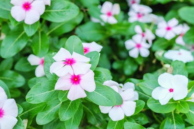 Flor-de-rosa closeup no jardim texturizado fundo Foto Premium