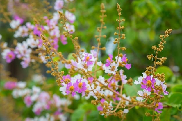 Flor-de-rosa e branca com fundo de bokeh Foto Premium