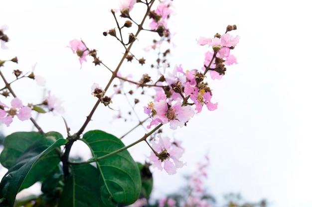 Flor de sakura Foto gratuita