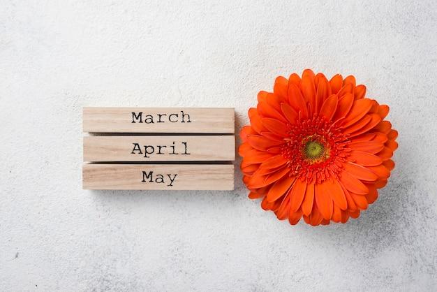 Flor de vista superior com meses de primavera Foto gratuita
