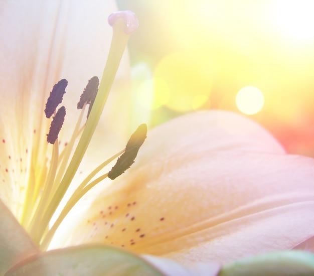 Flor do lírio com efeito do vintage Foto gratuita