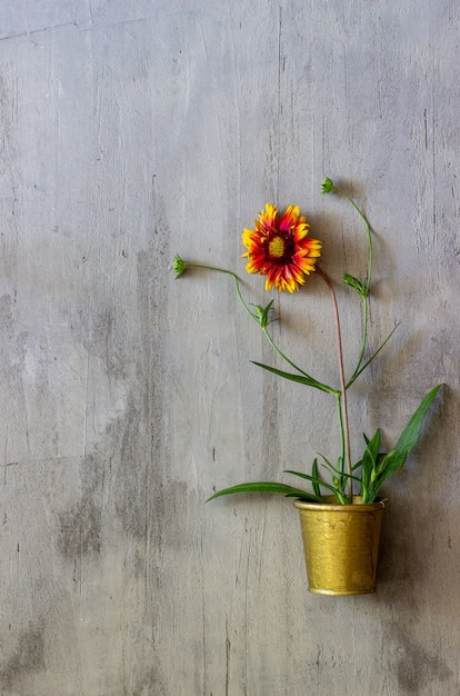 Flor em um concreto. conceito mínimo. criativo. Foto Premium
