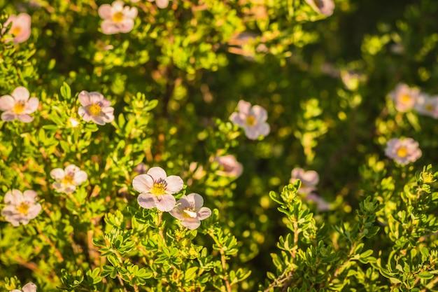Flor florescendo, ligado, um, experiência verde, com, capim, e, arbustos Foto Premium