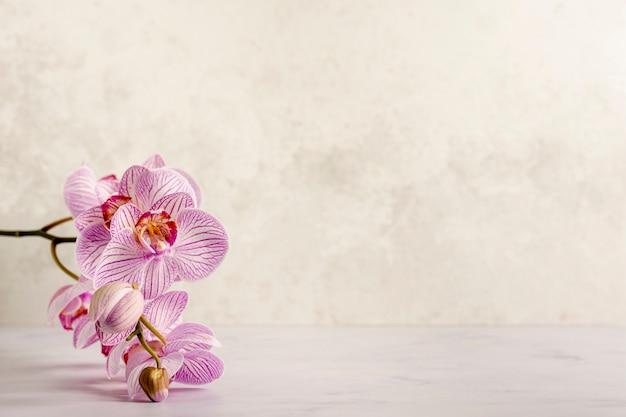 Flor linda spa rosa Foto Premium