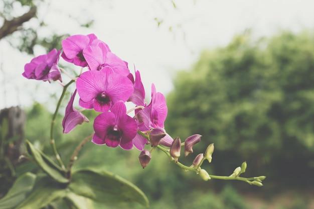 Flor (orchidaceae, flor de orquídea) rosa púrpura Foto Premium
