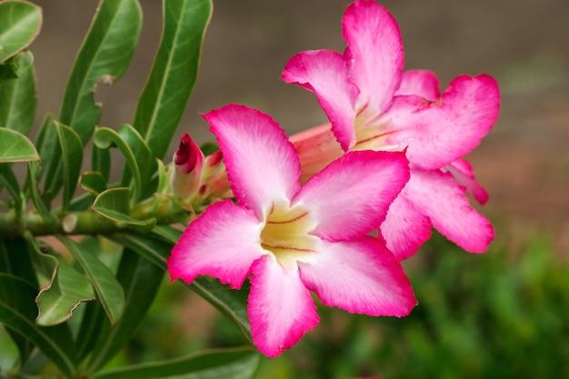 Flor rosa em um jardim botânico Foto Premium