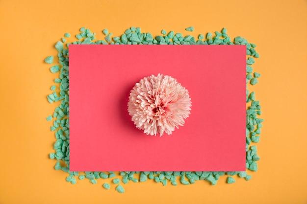 Flor rosa no retângulo rosa com pedras Foto gratuita