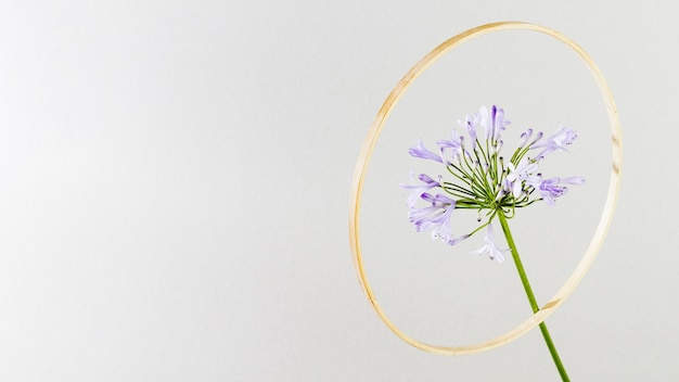 Flor roxa com moldura dourada Foto gratuita