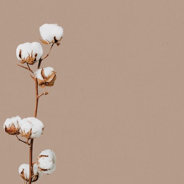 Flor seca natural floral Foto gratuita