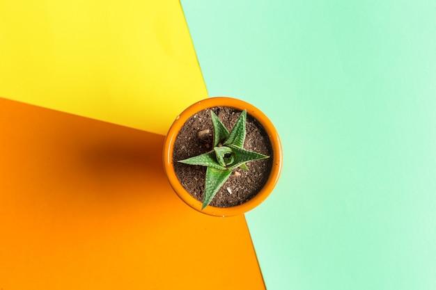 Flor suculenta no fundo colorido brilhante. vista plana leiga Foto Premium