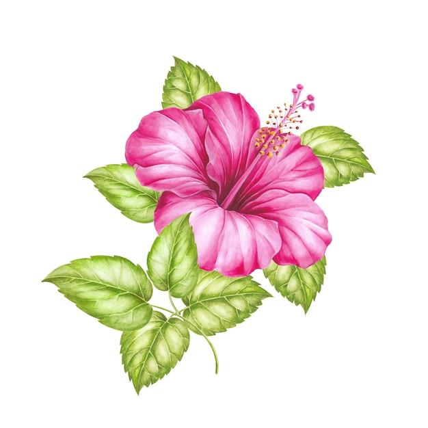 Flor vermelha do hibiscus isolada sobre o branco. Foto Premium
