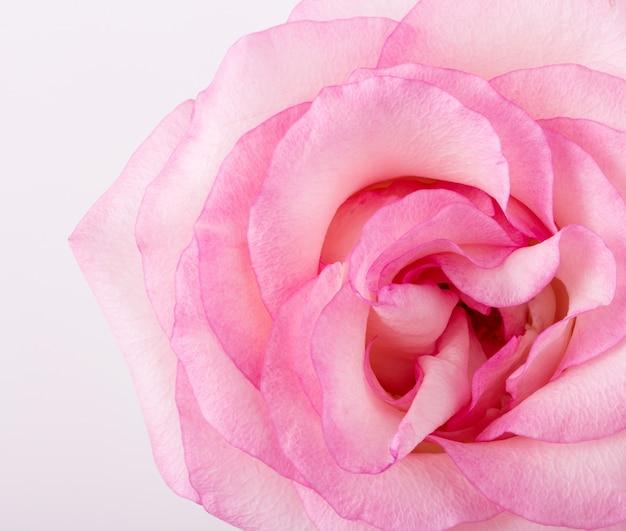 Flor Foto gratuita