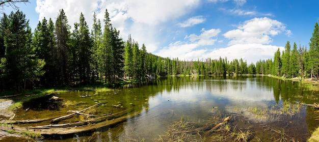 Flora e fauna do parque nacional das montanhas rochosas Foto Premium