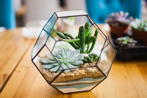 Florarium - composição de suculentas, pedra, areia e vidro, elemento de interior, decoração de casa Foto Premium