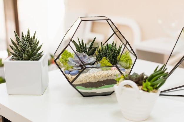 Florarium - composição de suculentas, pedra, areia e vidro, elemento do interior, decoração, terarium de vidro Foto Premium