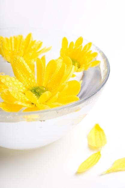 Flores amarelas close-up flutuando na água Foto Premium