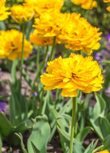 Flores amarelas no jardim Foto gratuita